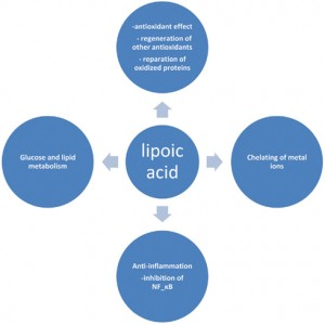 selected-biological-actions-of-lipoic-acid-1